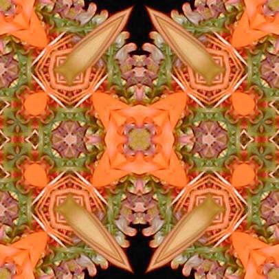 orange1.jpg (41751 bytes)