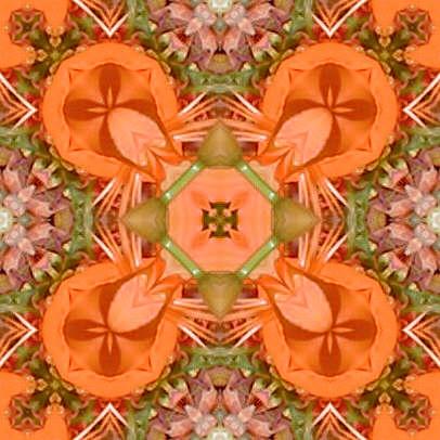 orange3.jpg (40033 bytes)