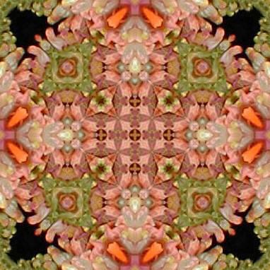 orange4x.jpg (43295 bytes)