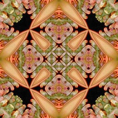 orange5.jpg (41614 bytes)