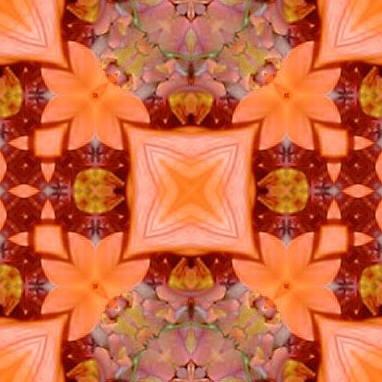 orange6x.jpg (34313 bytes)